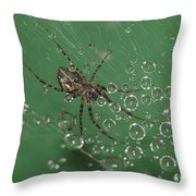 The Catcher Of Shperes Throw Pillow
