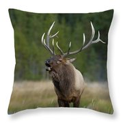 The Challenger Throw Pillow by Sandra Bronstein