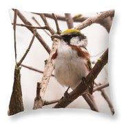 The Chestnut Warbler Throw Pillow