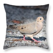The Chipper Mourning Dove Throw Pillow
