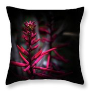 The Color Beautiful Throw Pillow