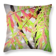 The Colors Of Shumac 3 Throw Pillow