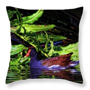 The Common Gallinule Throw Pillow