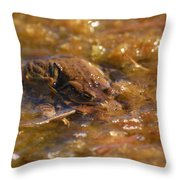 The Common Toads 2 Throw Pillow