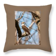 The Cooper's Hawk Throw Pillow