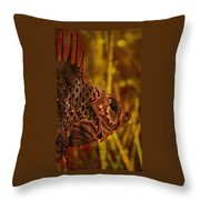 The Copper Rockfish Throw Pillow