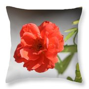 The Coral Rose Throw Pillow