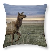 The Cow Elk Throw Pillow