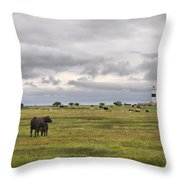 The Cows Of Ottenby 1 Throw Pillow