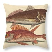 The Croker (perca Undulata) Throw Pillow