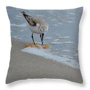 The Curious Little Sanderling 1 Throw Pillow