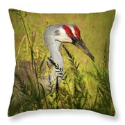 The Duo - Two Sandhill Cranes Throw Pillow