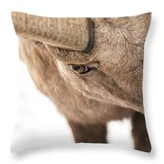 The Eye Of The Ram Throw Pillow