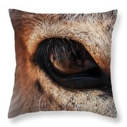 The Eye Of A Burro Throw Pillow