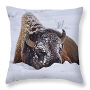 The Face Of Cold Throw Pillow by Greg Norrell