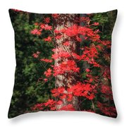 The First Maple Of Autumn Throw Pillow