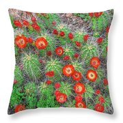 The First Week Of May, Claret Cup Cacti Begin To Bloom Throughout The Colorado Rockies.  Throw Pillow
