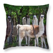 The Five Llamas Throw Pillow