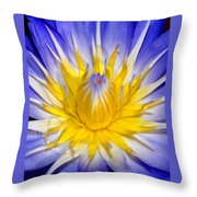 The Flame Of Beauty Spca1 Throw Pillow