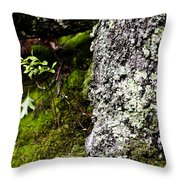 The Forest Floor Bluestone State Park West Virginia Throw Pillow