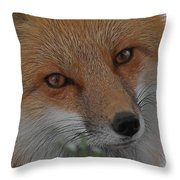 The Fox 4 Upclose Throw Pillow
