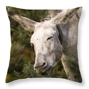 the Funny Donkey Throw Pillow