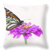 The Garden's Visitor Throw Pillow by Jeff Swanson