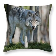 The Gray King... Throw Pillow