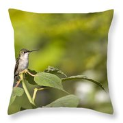 The Green Hummingbird Throw Pillow
