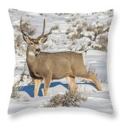The Gtnp Mule Deer Buck Throw Pillow