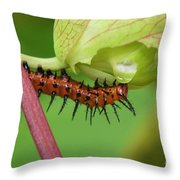 The Gulf Fritillary Caterpillar  Throw Pillow