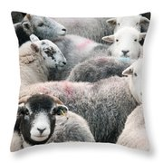 The Herdwicks Throw Pillow