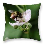 The Honey Gatherer Throw Pillow