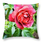 The Hot Cocoa Red Rose Throw Pillow