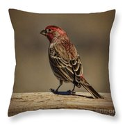 The House Finch Throw Pillow