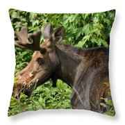 The Hungry Moose Throw Pillow