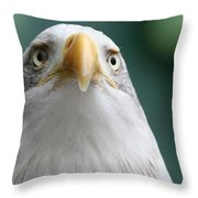 The Hunters Stare Throw Pillow
