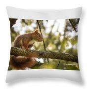 The Hypnotized Squirrel Throw Pillow