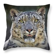 The Intense Stare Of A Snow Leopard Throw Pillow