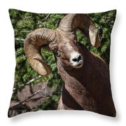 The Investigation Throw Pillow