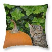 The Kitten And The Pumpkin Throw Pillow