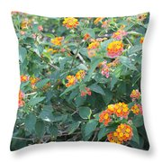 The Lantana In The Near 20 Throw Pillow