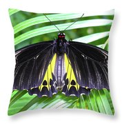 The Largest Butterfly In The World Throw Pillow
