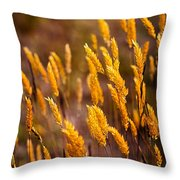 The Last Flowers Of Winter  Throw Pillow