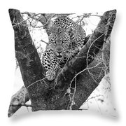 The Leopard's Stare Throw Pillow