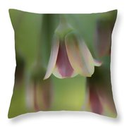 The Light Inside The Belfry  Throw Pillow