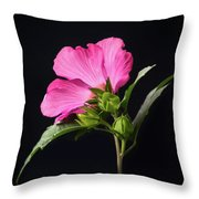 The Light Rose Of Sharon 2017 Square Throw Pillow
