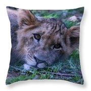 The Lion Cub Throw Pillow