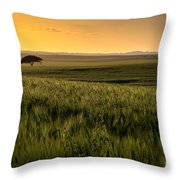 The Lonely Tree, Israel Landscape Throw Pillow