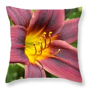 The Love Of Lilies Throw Pillow